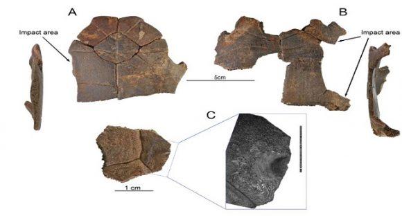 Människor jagade sköldpaddor i Israel för 60 000 år sedan